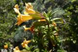 [Yellow flower]