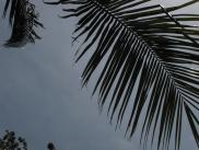 [Palm leaves and sky]