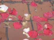 [Rose pedals in the fountain]