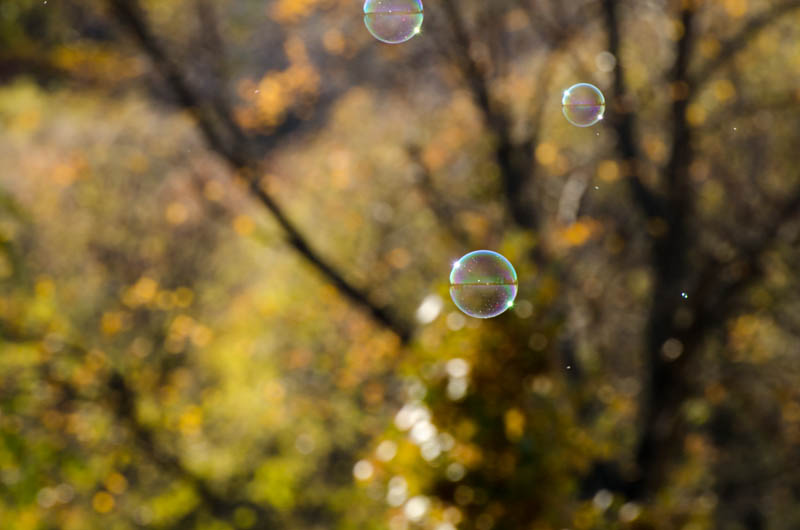 [A momentary distraction from the world: Bubbles!]